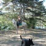 horseTour (12)