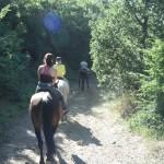 horseTour (15)