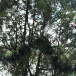 42_Ktulhu lake 20_2015 (63)