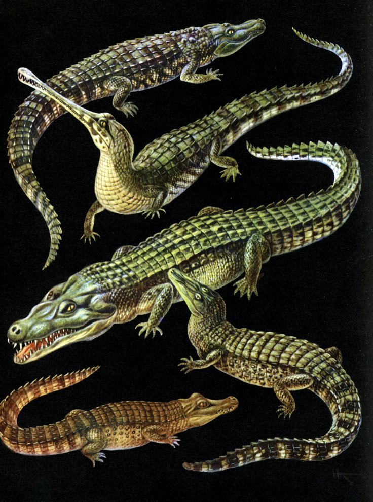 крокодил 2